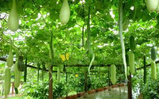 pergola zucche ornamentali orto terrazzo giardino pensile