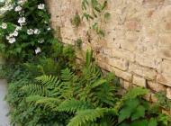 dryopteris affinis garden studio bologna vivaio progettazione giardino terrazzo